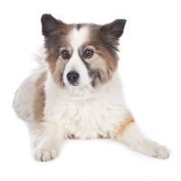 Elo auf Hundeversicherungen24.com