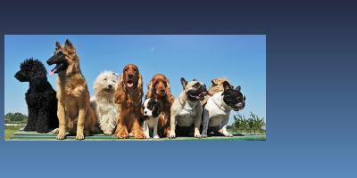Alles zum Thema Hundeversicherungen auf www.hundeversicherungen24.com