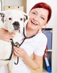 Hundeversicherung Boxer