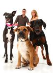 Kampfhundehaftpflicht