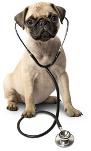 Hundeversicherung Mops