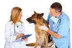 Hundeversicherung Schäferhund