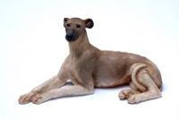 Sloughi auf Hundeversicherungen24.com
