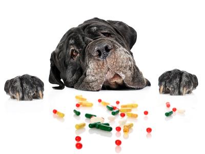 Tierarztversicherung für Molosser